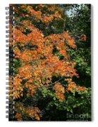 Golden Tree Moment Spiral Notebook