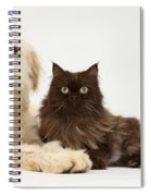 Goldendoodle And Chocolate Cat Spiral Notebook