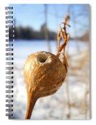 Goldenrod Gall Hole Spiral Notebook