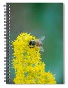 Goldenrod Visitor 3 Spiral Notebook