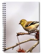 Goldfinch In Sweetgum Spiral Notebook