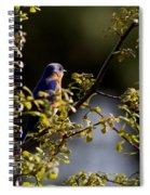 Good Morning Sunshine - Eastern Bluebird Spiral Notebook