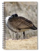 Goose Rubbing Its Back Spiral Notebook