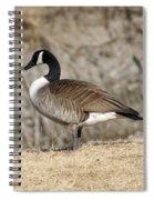 Goose Standing Still Spiral Notebook