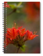 Gorgeous Cluster Spiral Notebook