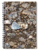 Gossamer-winged Butterfly Spiral Notebook