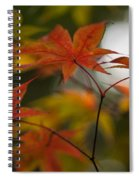 Graceful Layers Spiral Notebook