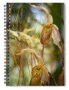 Graceful Orchids Spiral Notebook