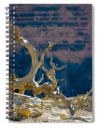 Grand Canyon Dead Tree Spiral Notebook