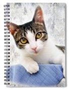 Grand Kitty Cuteness 2 Spiral Notebook