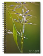 Grass In Flower Spiral Notebook