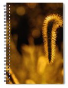 Grass In Golden Light Spiral Notebook