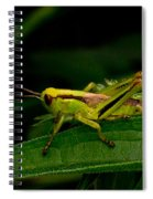 Grasshopper 2 Spiral Notebook