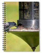 Gray Feathered Spiral Notebook