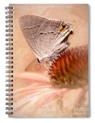 Gray Hairstreak Butterfly Spiral Notebook