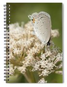 Gray Hairstreak Butterfly On Milkweed Wildflowers Spiral Notebook