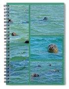 Gray Seals At Chatham - Cape Cod Spiral Notebook