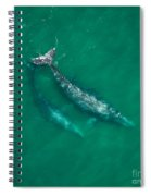 Gray Whale Mother And One-year-old Calf Spiral Notebook