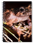Gray Wood Frog Spiral Notebook