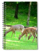 Grazing Doe Spiral Notebook