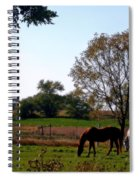 Grazing Horses Spiral Notebook
