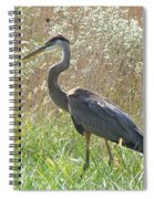 Great Blue Heron - Ardea Herodias Spiral Notebook