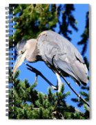 Great Blue Heron Concentration Spiral Notebook