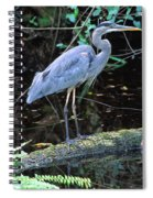 Great Blue Heron, Florida Spiral Notebook