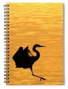 Great Blue Heron Landing In Golden Light Spiral Notebook