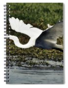 Great Egret In Flight  Spiral Notebook