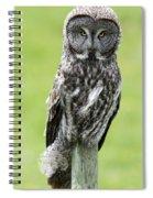Great Grey Owl, Water Valley, Alberta Spiral Notebook