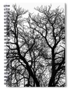 Great Old Tree Spiral Notebook