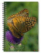 Great Spangled Fritillaries On Thistle Din108 Spiral Notebook