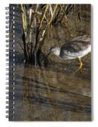 Greater Yellowlegs At Spi Spiral Notebook