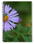 Green And Purple Spiral Notebook