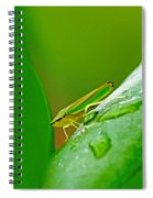 Green And Yellow Bug Spiral Notebook
