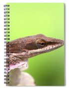 Green Anole In Pastels Spiral Notebook