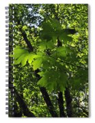 Green Canopy Spiral Notebook