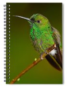 Green-crowned Brilliant Spiral Notebook