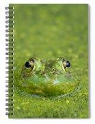 Green Frog Eyes Spiral Notebook