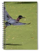 Green Heron In Flight Spiral Notebook