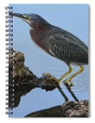 Green Heron Visiting The Pond Spiral Notebook