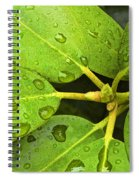 Green Leaves With Water Droplets Spiral Notebook