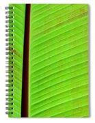 Green Lines Spiral Notebook