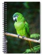 Green Parrot Spiral Notebook