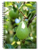 Green Pear Spiral Notebook