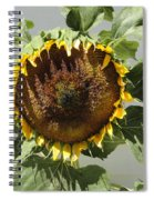 Green Ray Spiral Notebook