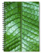Green Scaly Leaf Pattern Spiral Notebook