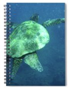 Green Sea Turtle 1 Spiral Notebook