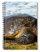 Green Sea Turtle Of Hawaii Spiral Notebook